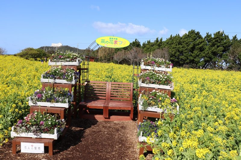 伊良湖 菜の花ガーデン